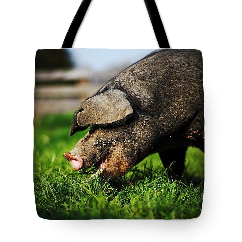 Pig Tote Bag featuring the photograph Pig Eating by Jimss