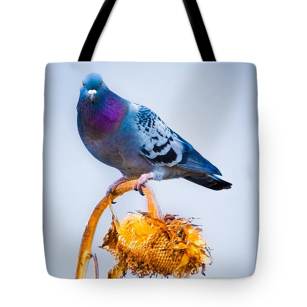 Pigeon Tote Bag featuring the photograph Pigeon On Sunflower by Bob Orsillo