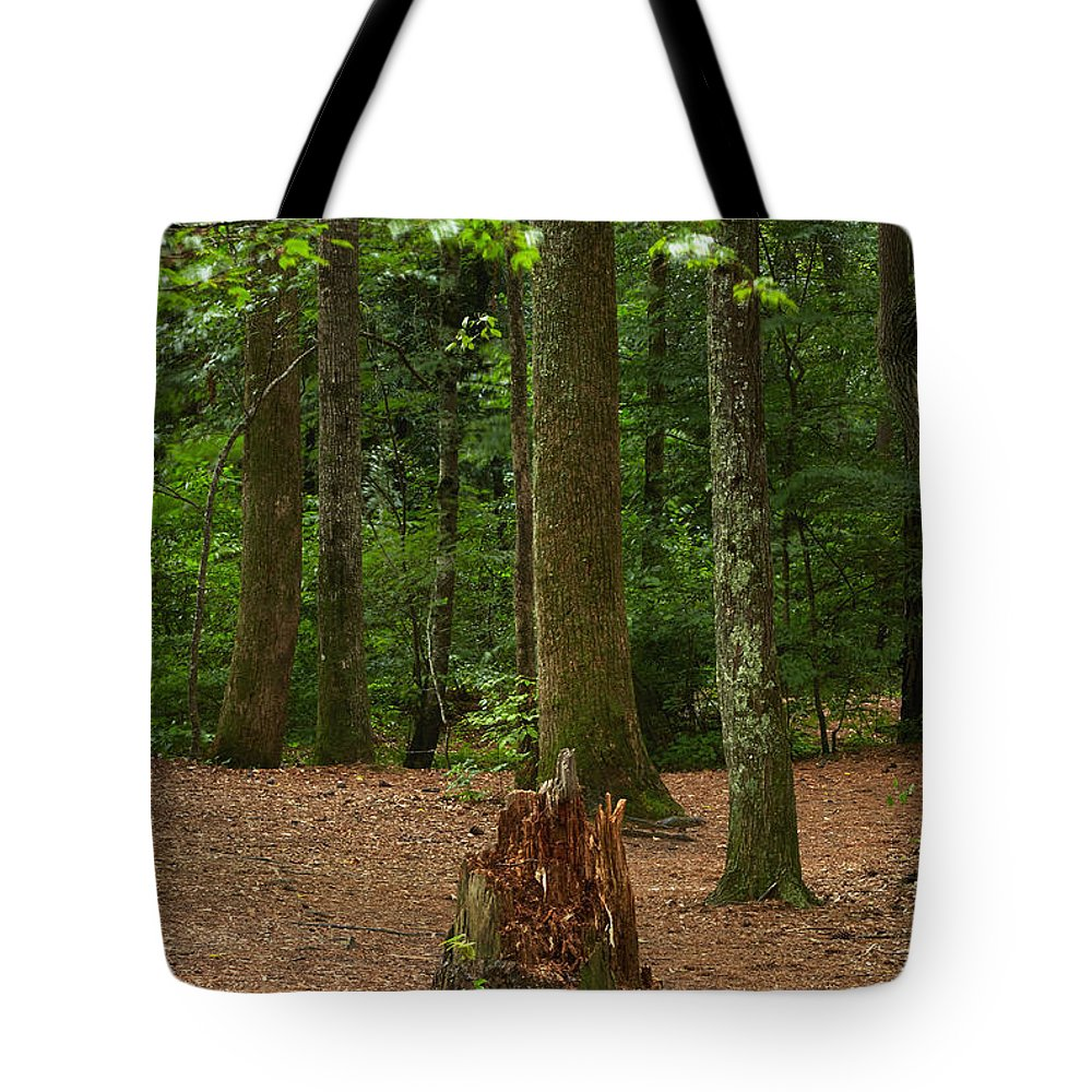 Landscapes Tote Bag featuring the photograph Pine Stump by Matthew Pace