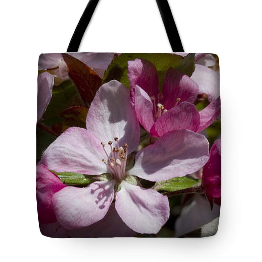 Malus Tote Bag featuring the photograph Pink And Pretty by Kathy Clark