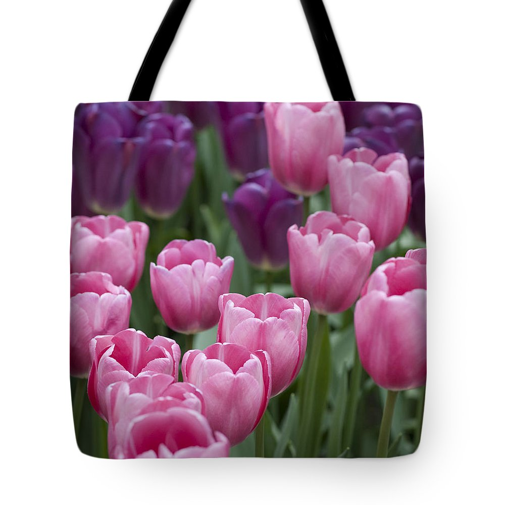 Dutch Tote Bag featuring the photograph Pink And Purple Dutch Tulips by Juli Scalzi