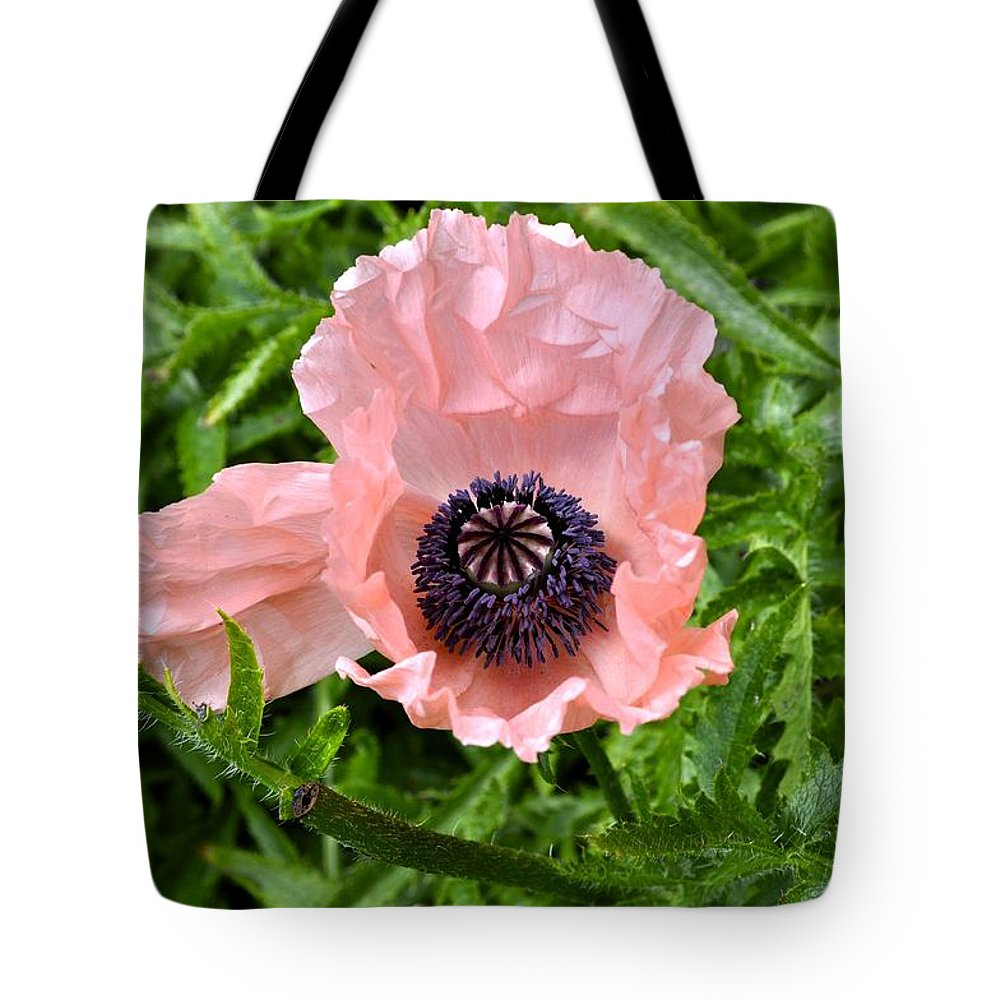 Poppy Tote Bag featuring the photograph Pink And Purple Poppy by Cathy Mahnke