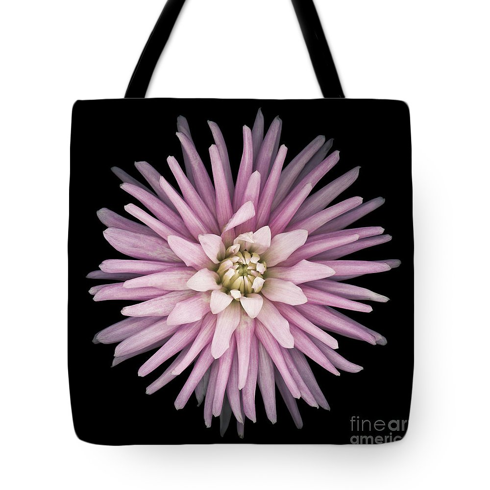 Beauty Tote Bag featuring the photograph Pink Dahlia by Oscar Gutierrez