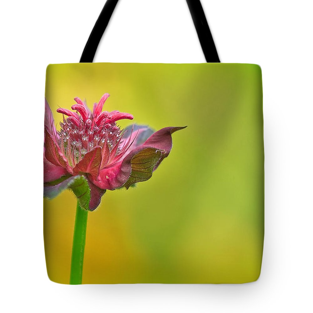 Concord Tote Bag featuring the photograph Pink Jester In Greene by Sylvia J Zarco
