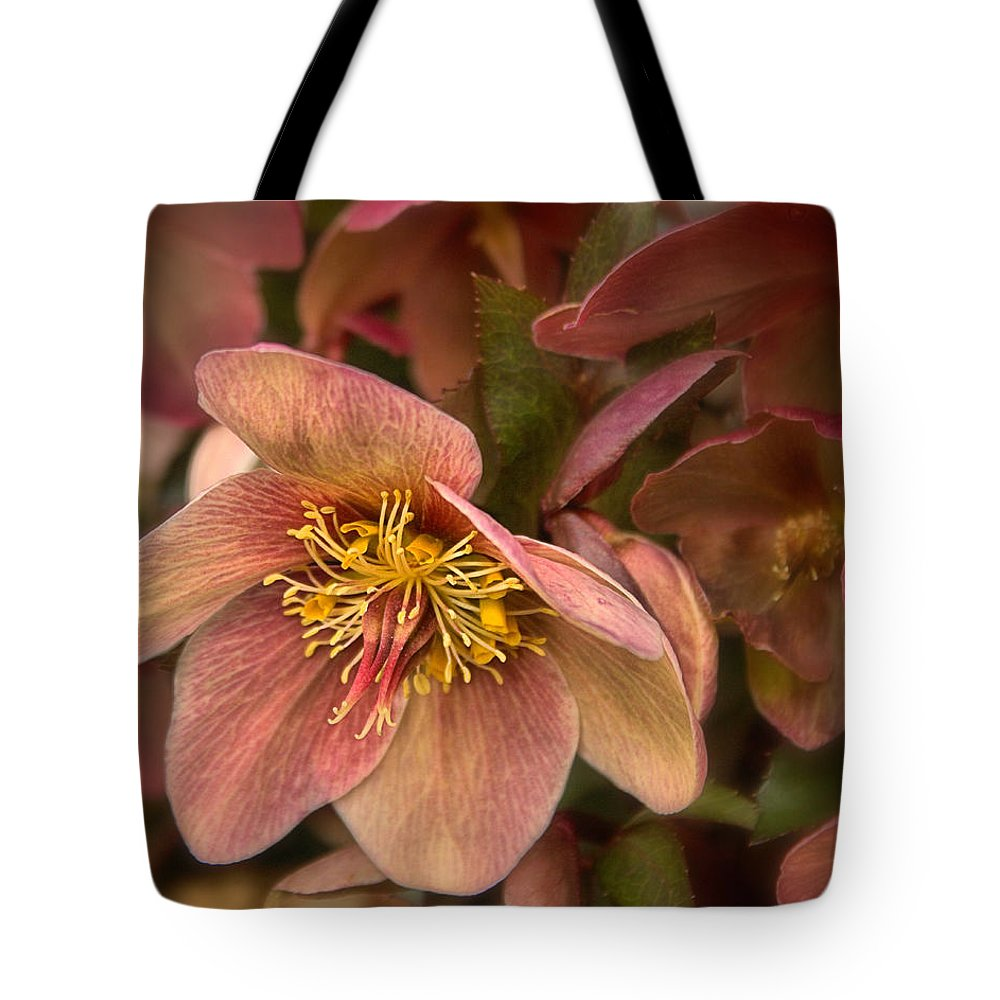 Roses Tote Bag featuring the photograph Pink Lenten Rose by Mel Hensley