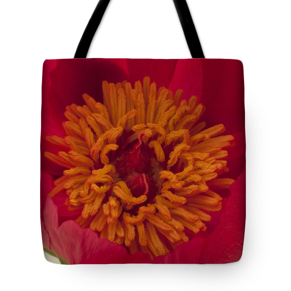 Pink Peony Stamen Tote Bag featuring the photograph Pink Peony Stamen Macro by Sandra Foster