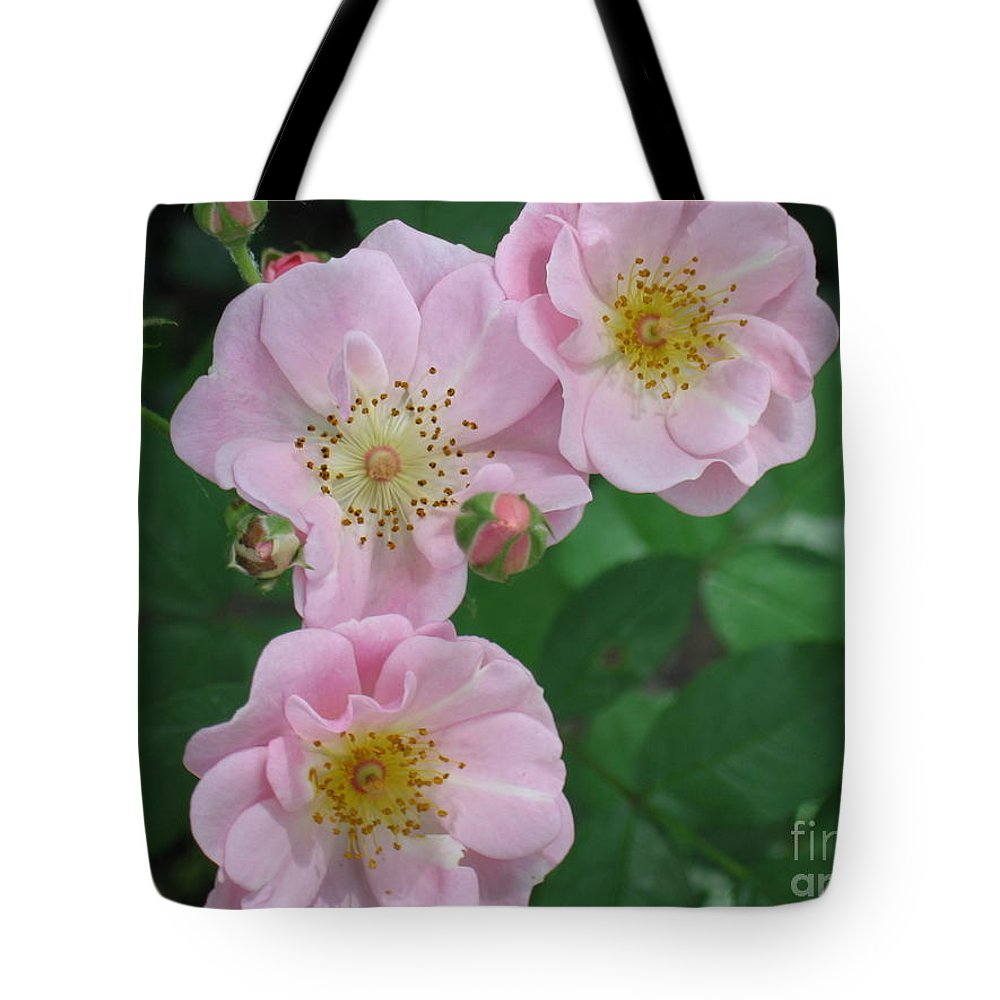 Knockout Roses Tote Bag featuring the photograph Pink Roses by HEVi FineArt