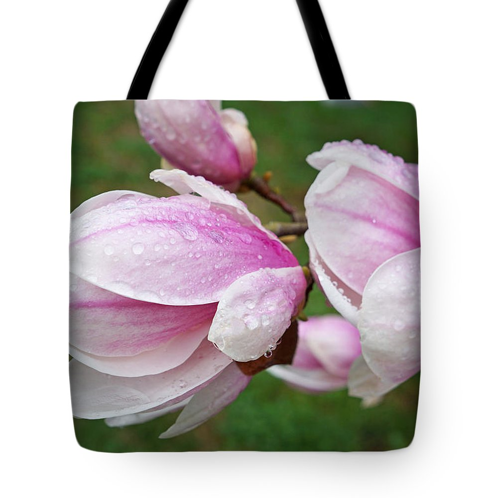 Raindrops Tote Bag featuring the photograph Pink White Wet Raindrops Magnolia Flowers by Baslee Troutman