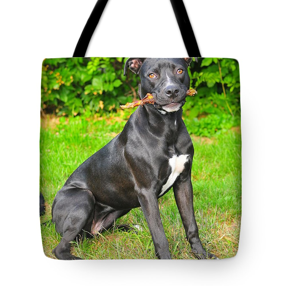 Black White Pit Bull Terrier Tote Bag featuring the photograph Pit Bull Terrier II by Catherine Reusch Daley