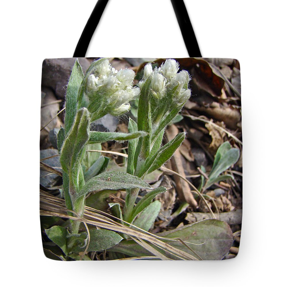plantain Leaved Pussytoes Tote Bag featuring the photograph Plantain-leaved Pussytoes Wildflowers - Antennaria Plantaginifolia by Mother Nature