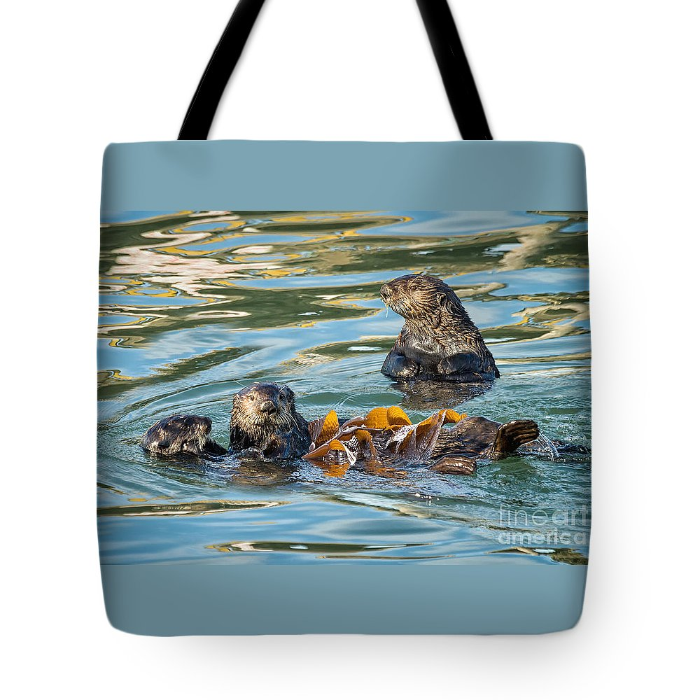 Animal Tote Bag featuring the photograph Play Time by Alice Cahill