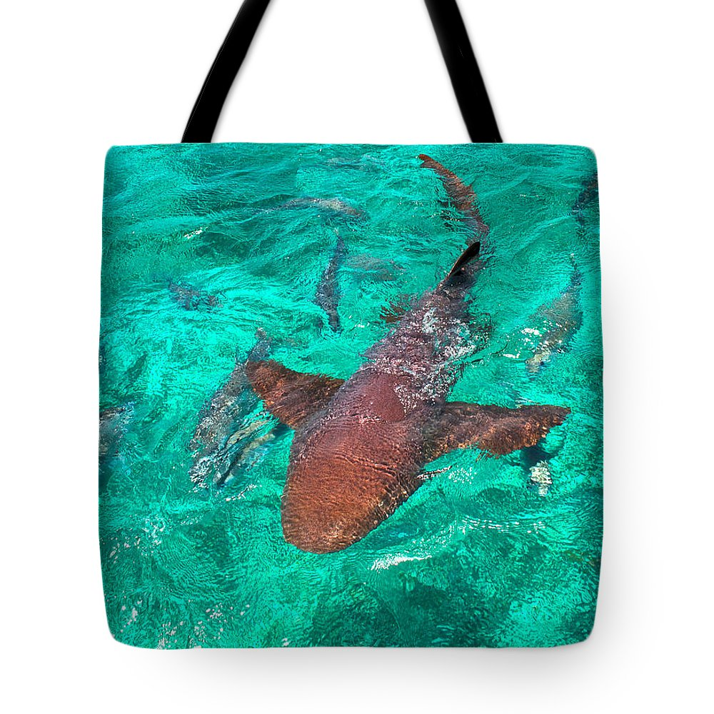 Belize Tote Bag featuring the photograph I Have My Eyes On You by Kristina Deane