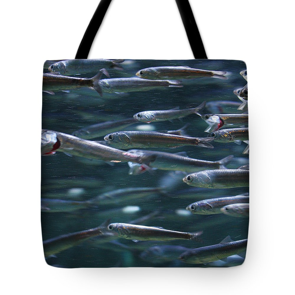 Fish Tote Bag featuring the photograph Plenty Of Fish In The Sea by Robert Woodward
