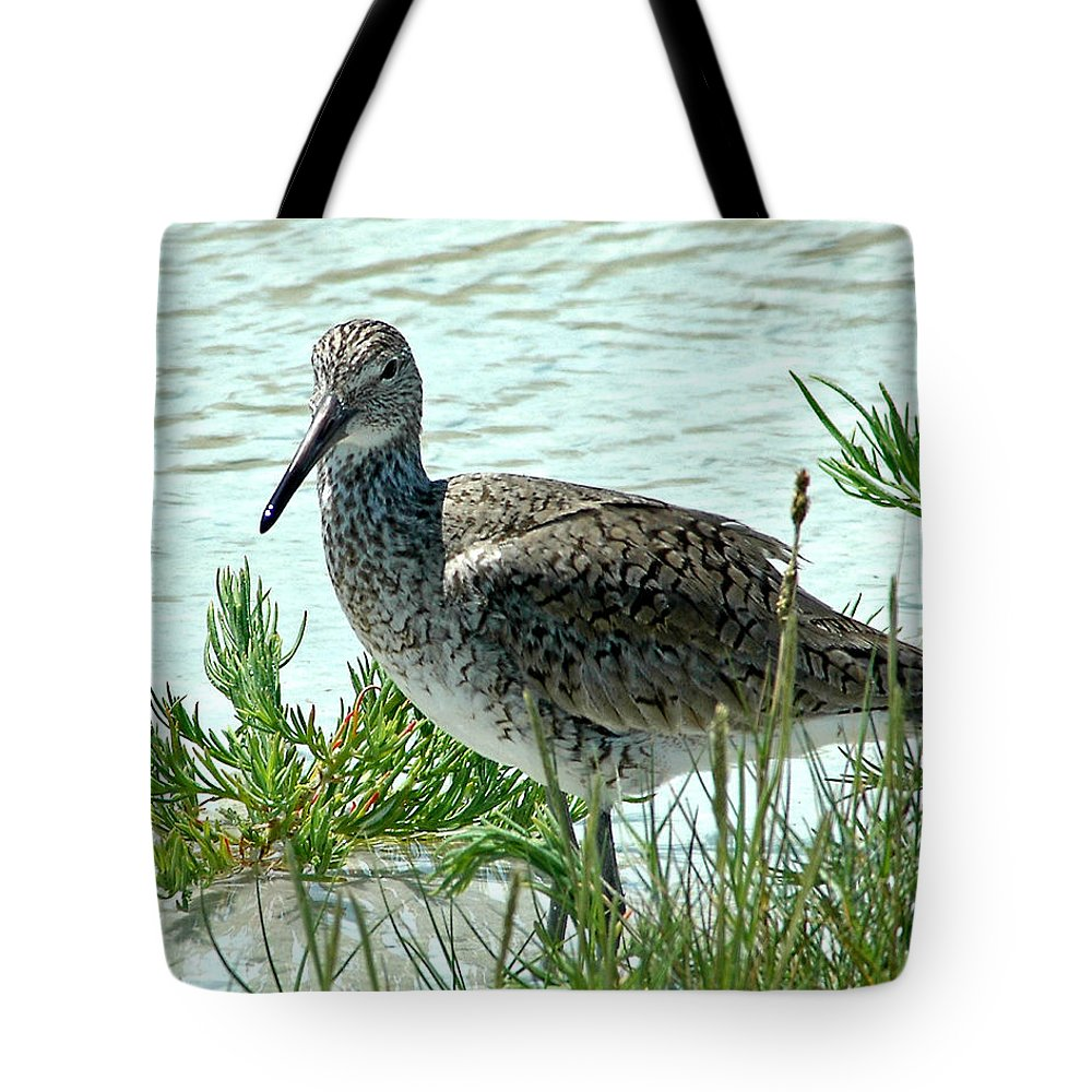 Eastern Willet Tote Bag featuring the photograph Eastern Willet by Norman Johnson