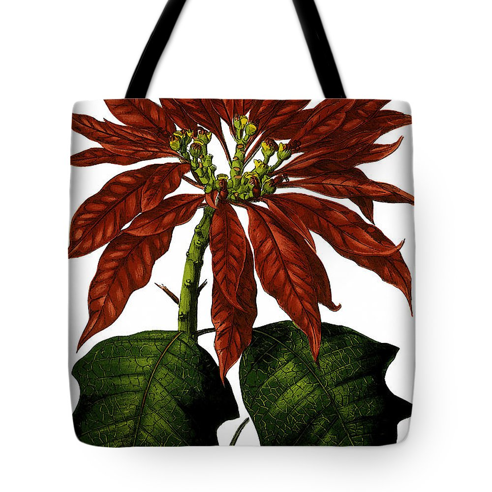 Poinsettia Tote Bag featuring the digital art Poinsettia A Traditional Christmas Plant Vintage Poster by R Muirhead Art