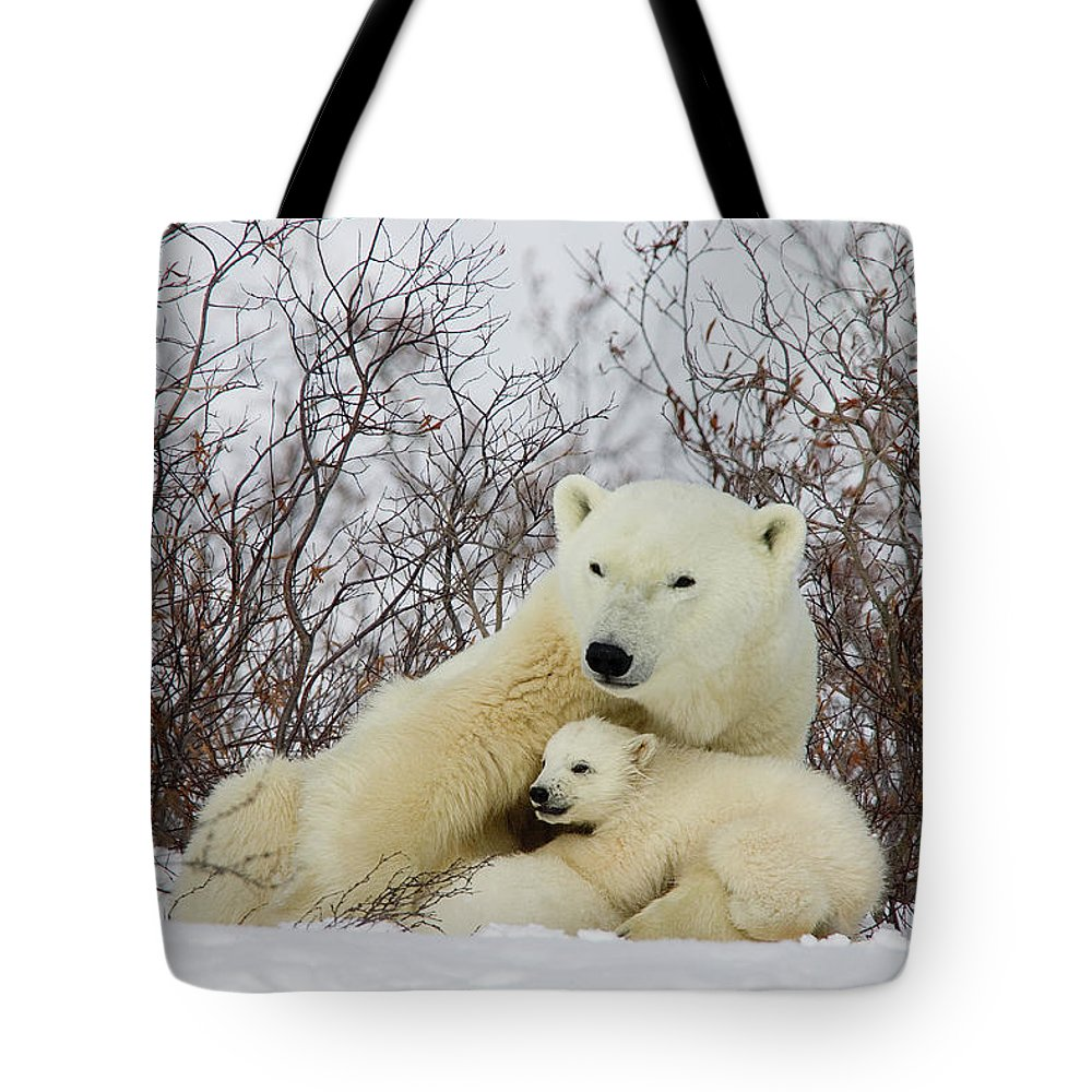 Mp Tote Bag featuring the photograph Polar Bear And 3 Month Old Cubs by Matthias Breiter