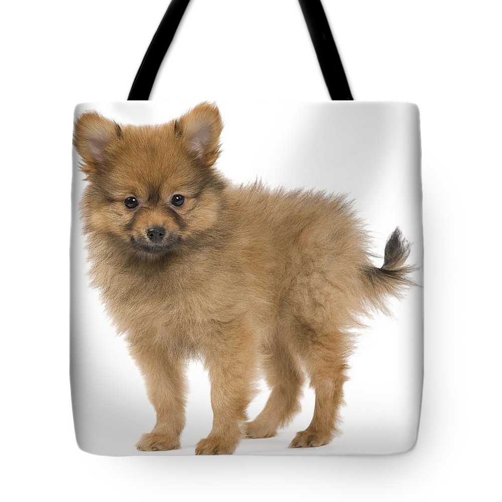 Pomeranian Tote Bag featuring the photograph Pomeranian Puppy Dog by Jean-Michel Labat
