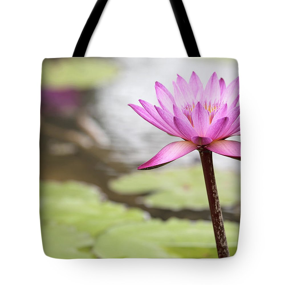 Water Tote Bag featuring the photograph Pond With Pink Water Lily Flower by Jit Lim