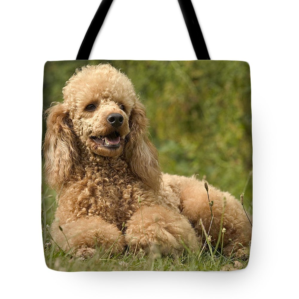 Poodle Tote Bag featuring the photograph Poodle Dog by Jean-Michel Labat