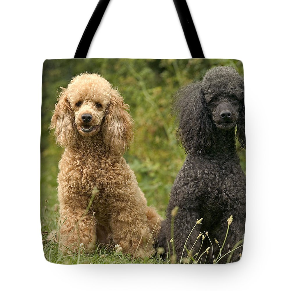 Poodle Tote Bag featuring the photograph Poodle Dogs by Jean-Michel Labat