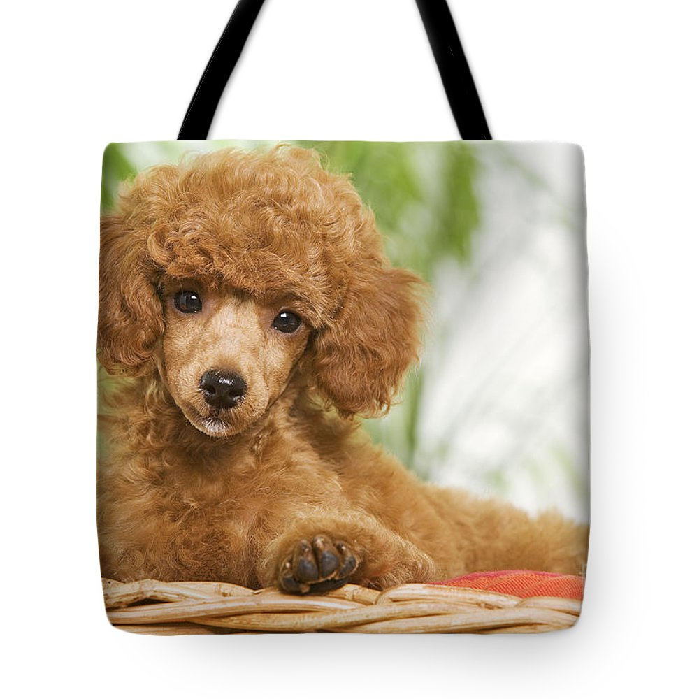 Poodle Tote Bag featuring the photograph Poodle by Jean-Michel Labat