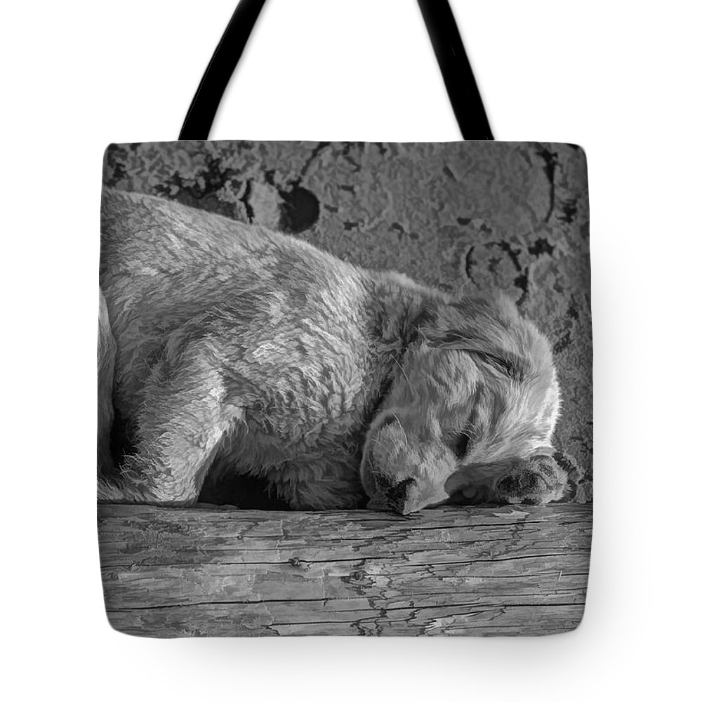 Puppy Tote Bag featuring the photograph Pooped Puppy Bw by Steve Harrington