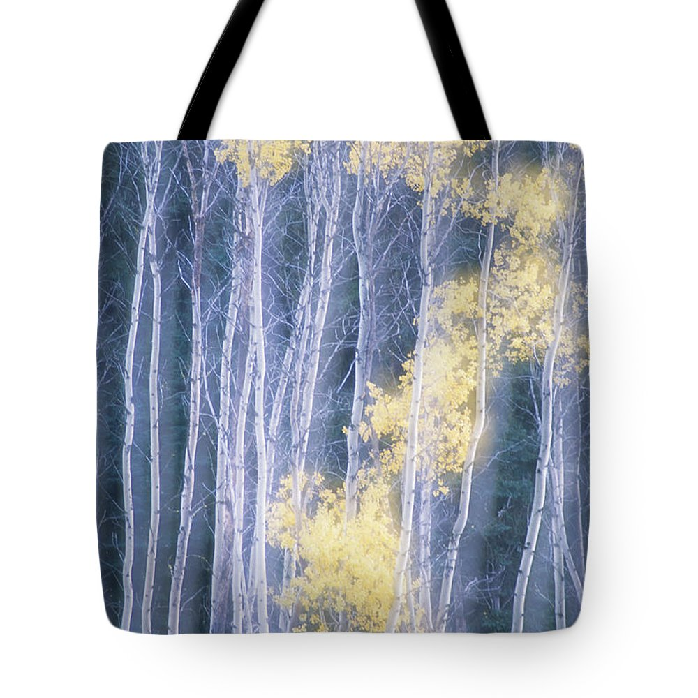 B.c. Tote Bag featuring the photograph Poplar Trees In Autumn, Grey Creek by Kari Medig