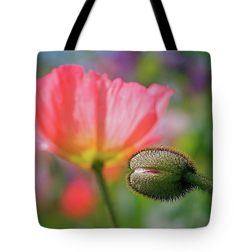 Poppies Tote Bag featuring the photograph Poppy In Waiting by Rona Black