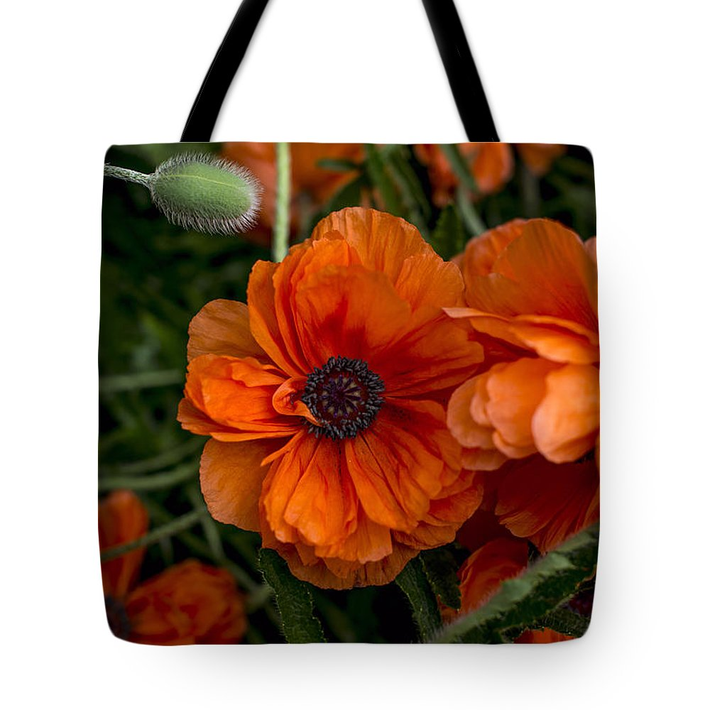 Flowers Tote Bag featuring the photograph Poppy by Jayne Gohr