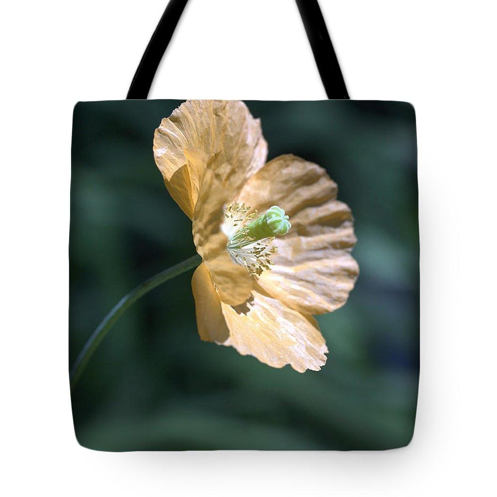 Poppy Orange Tote Bag featuring the photograph Poppy by Tony Cordoza