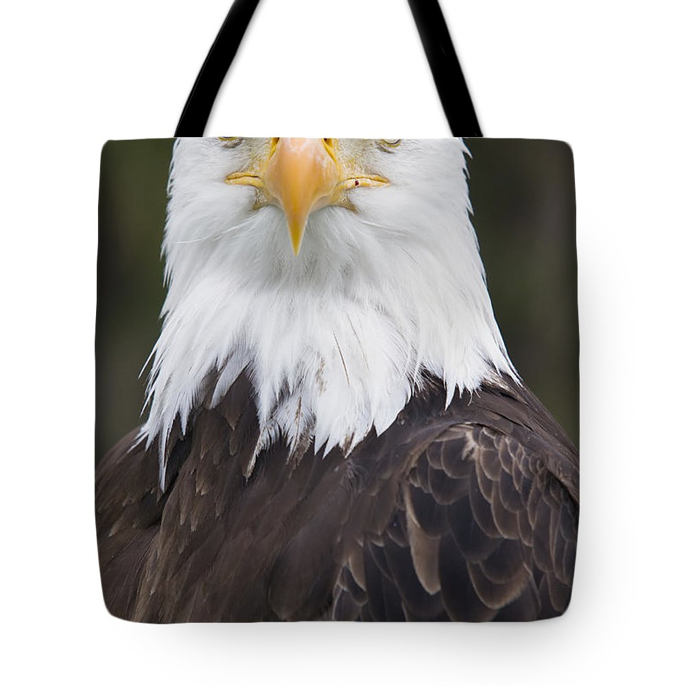 Bald Eagle Tote Bag featuring the photograph Portrait Of A Bald Eagle In Gaspesie by Philippe Henry