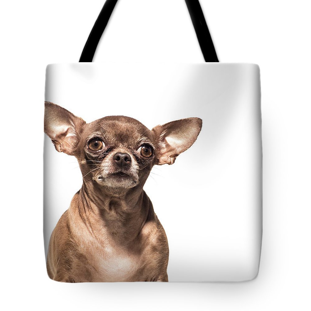 Pets Tote Bag featuring the photograph Portrait Of A Chocolate Chihuahua - The by Amandafoundation.org