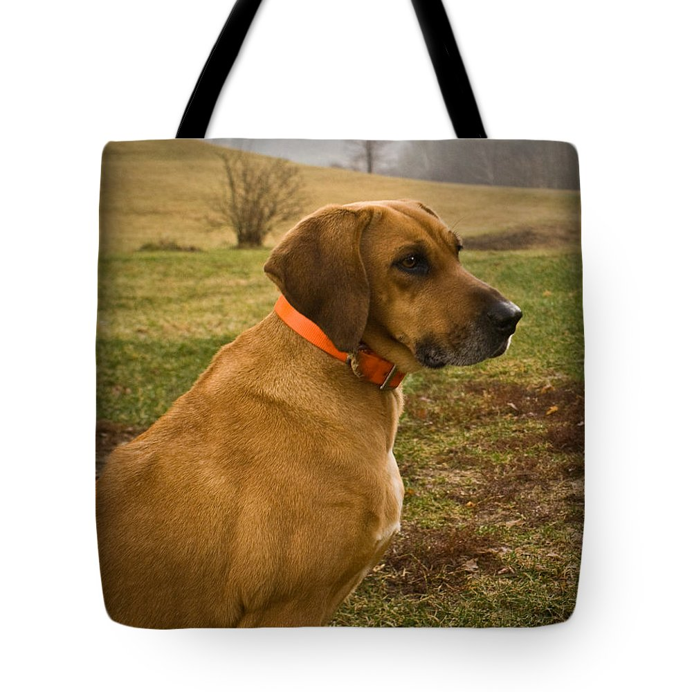 Dog Tote Bag featuring the photograph Portrait Of A Dog by Douglas Barnett