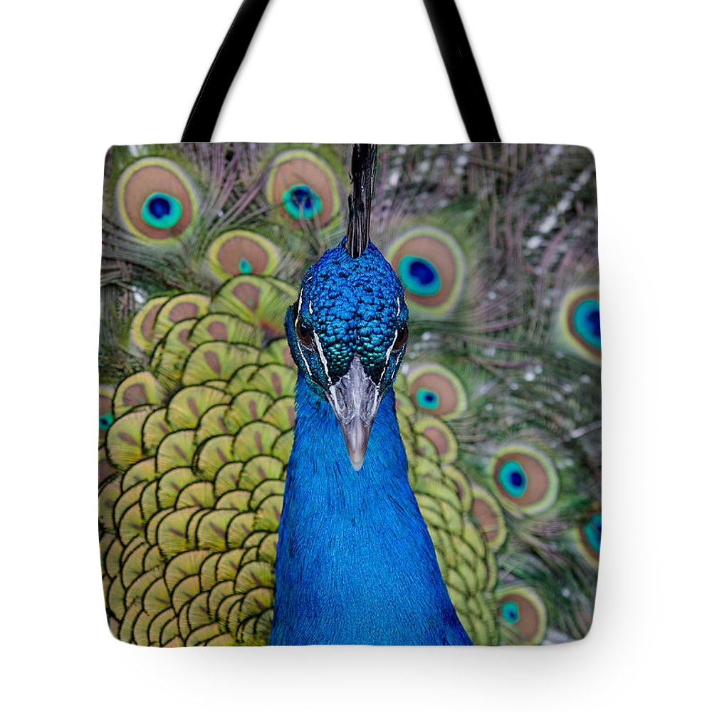 Peacock Tote Bag featuring the photograph Portrait Of A Peacock by Greg Nyquist
