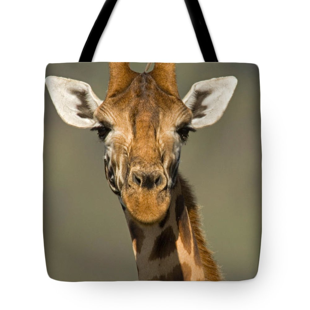 Photography Tote Bag featuring the photograph Portrait Of A Rothchilds Giraffe by Panoramic Images