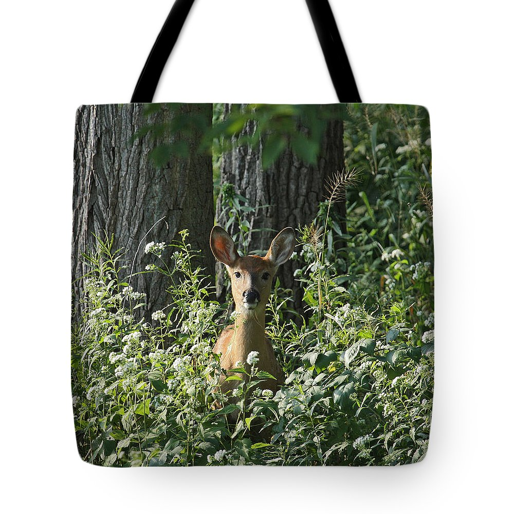 Fawn Tote Bag featuring the photograph Portrait Of A Whitetail Fawn II by Timothy O'Brien
