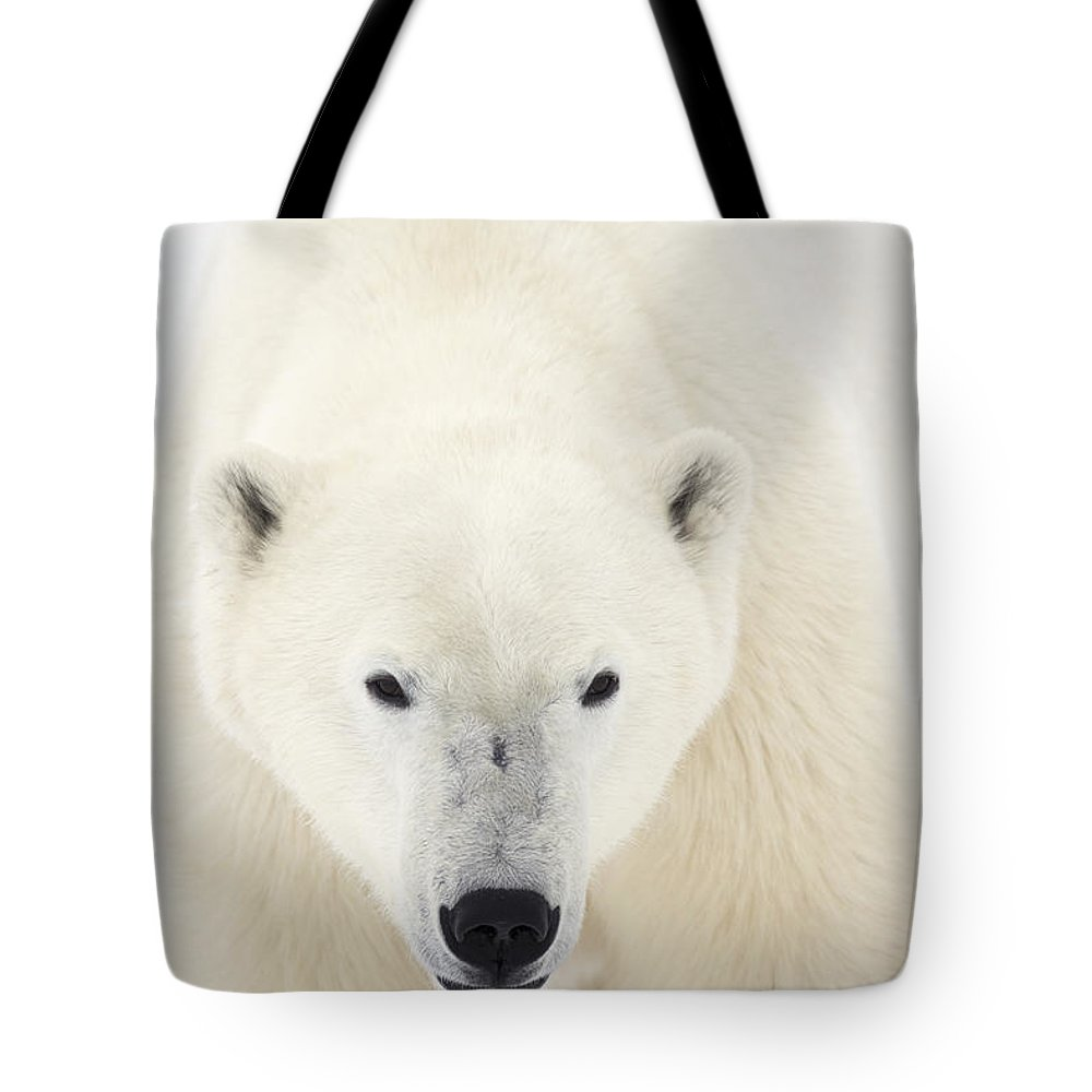 Churchill Tote Bag featuring the photograph Portrait Of Polar Bear On The Shore Ice by Robert Postma