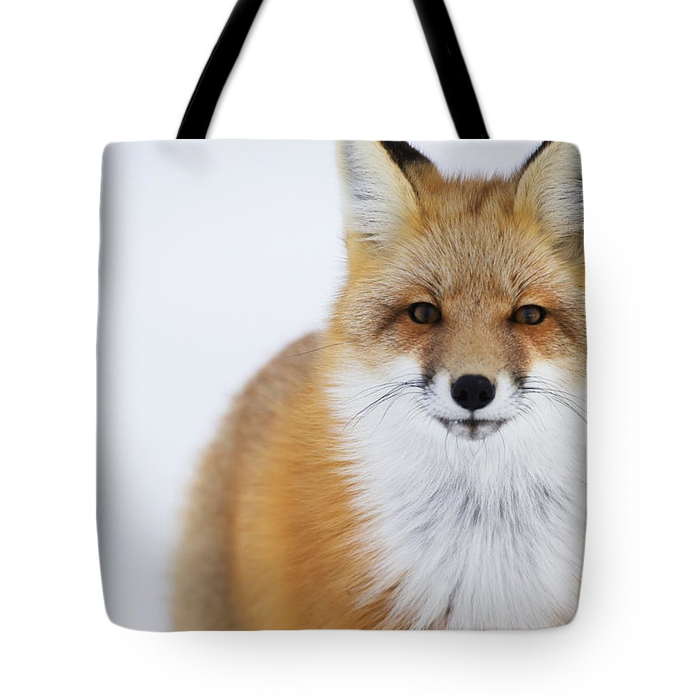 Canada Tote Bag featuring the photograph Portrait Of Red Foxchurchill Manitoba by Robert Postma