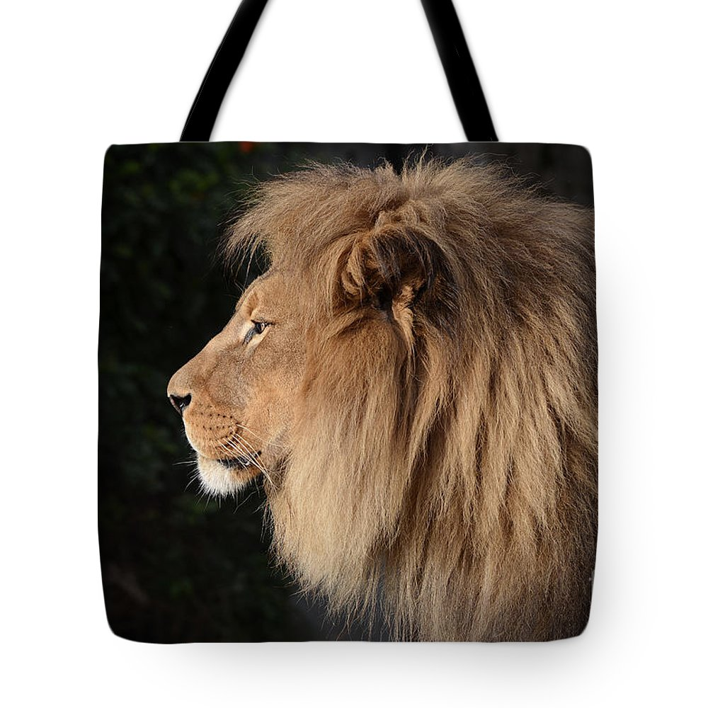 Lion Tote Bag featuring the photograph Portrait Of The King Of The Jungle by Jim Fitzpatrick