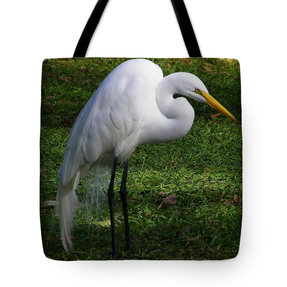 Bird Tote Bag featuring the photograph Posing Prettily by Judy Wanamaker