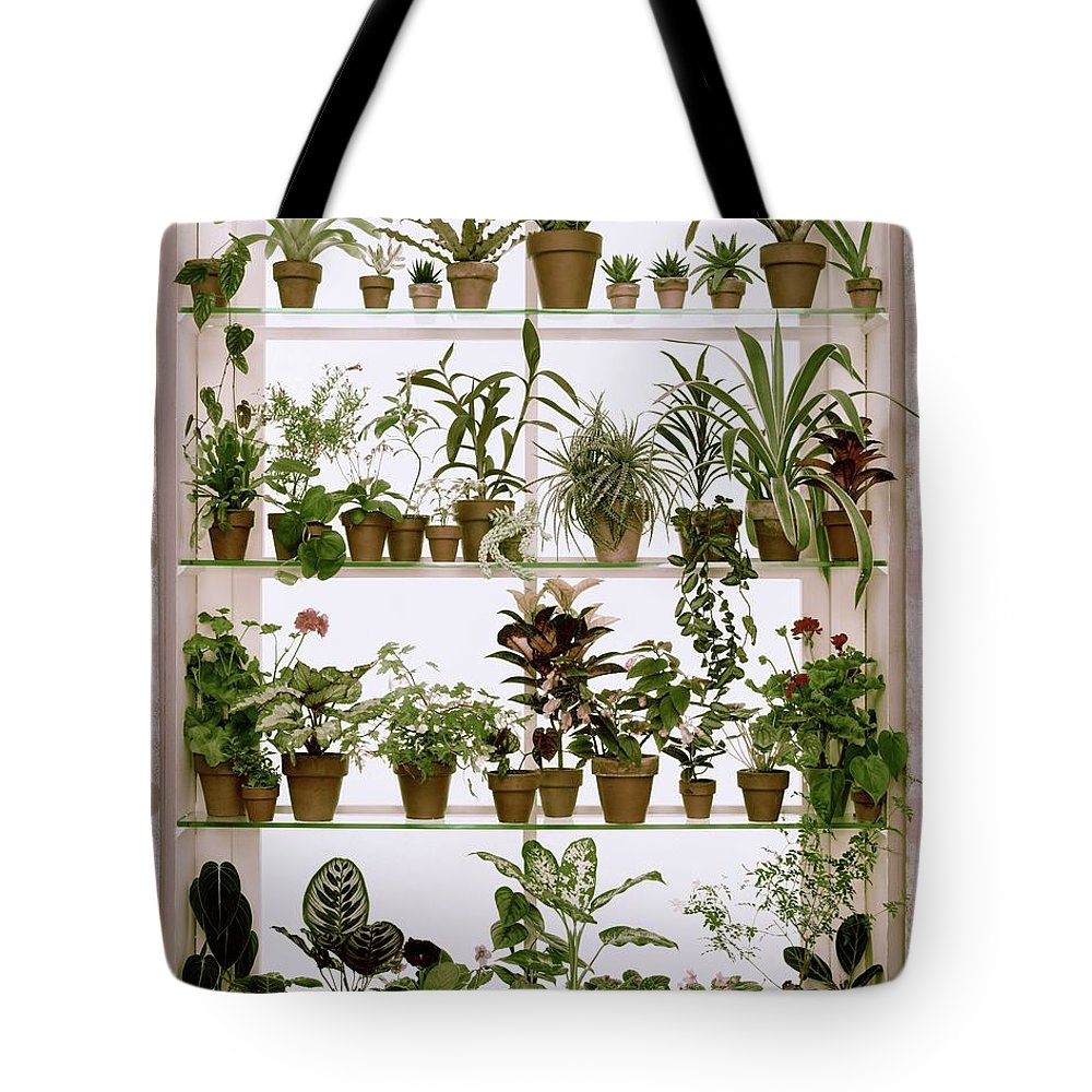 Plants Tote Bag featuring the photograph Potted Plants On Shelves by Wiliam Grigsby