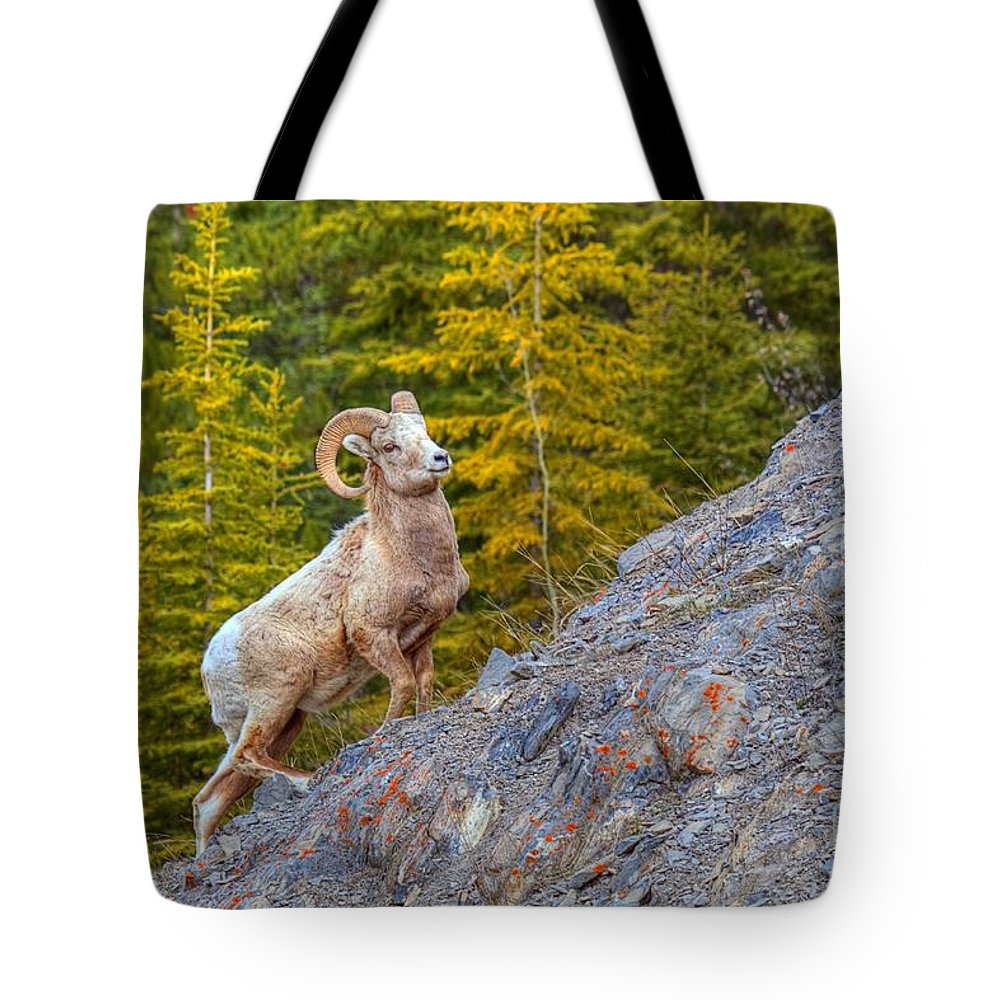 Bighorn Ram Tote Bag featuring the photograph Power Up by James Anderson