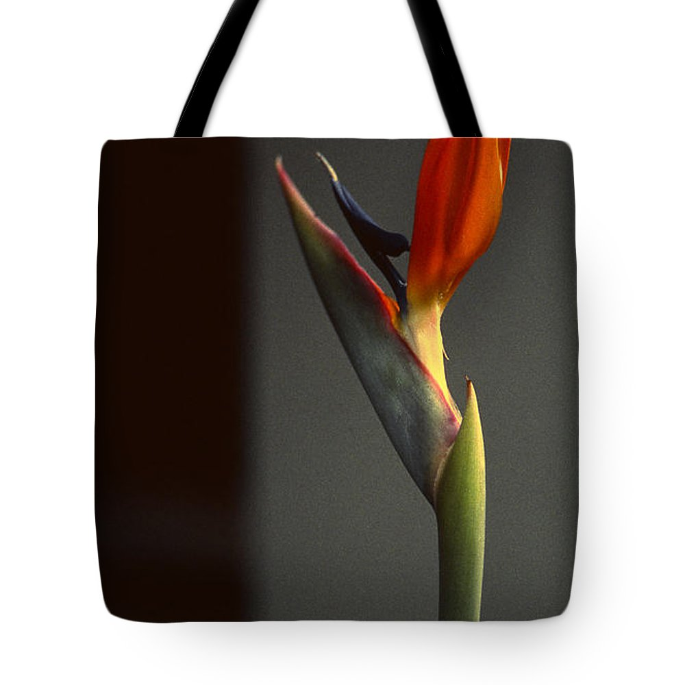 Praise The Lord Tote Bag featuring the photograph Praise by Bruce Blanchard