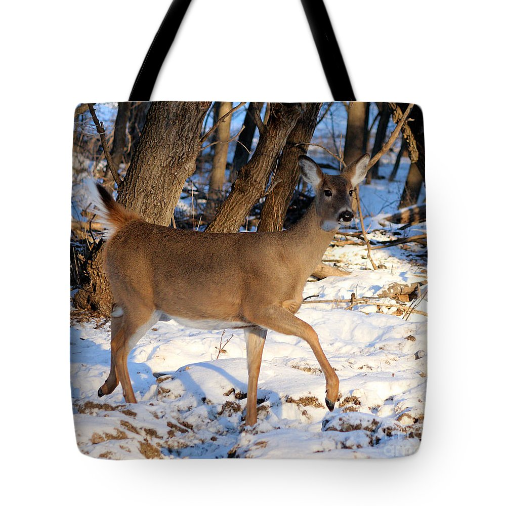 Deer Tote Bag featuring the photograph Prancer by Lori Tordsen