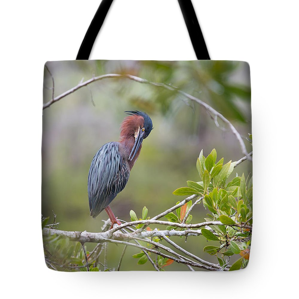 Green Heron Tote Bag featuring the photograph Preening Greenie by John M Bailey