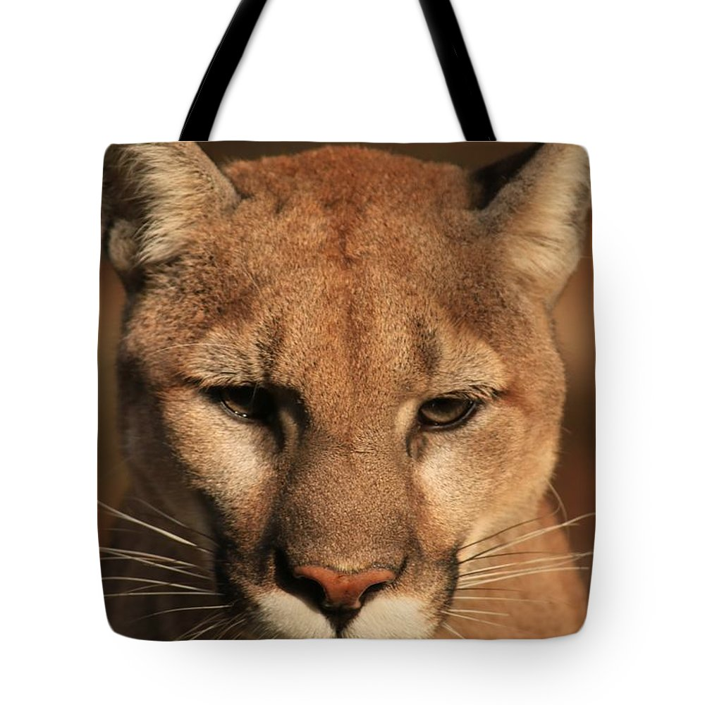 Cougar Tote Bag featuring the photograph Preparing To Race by Laddie Halupa