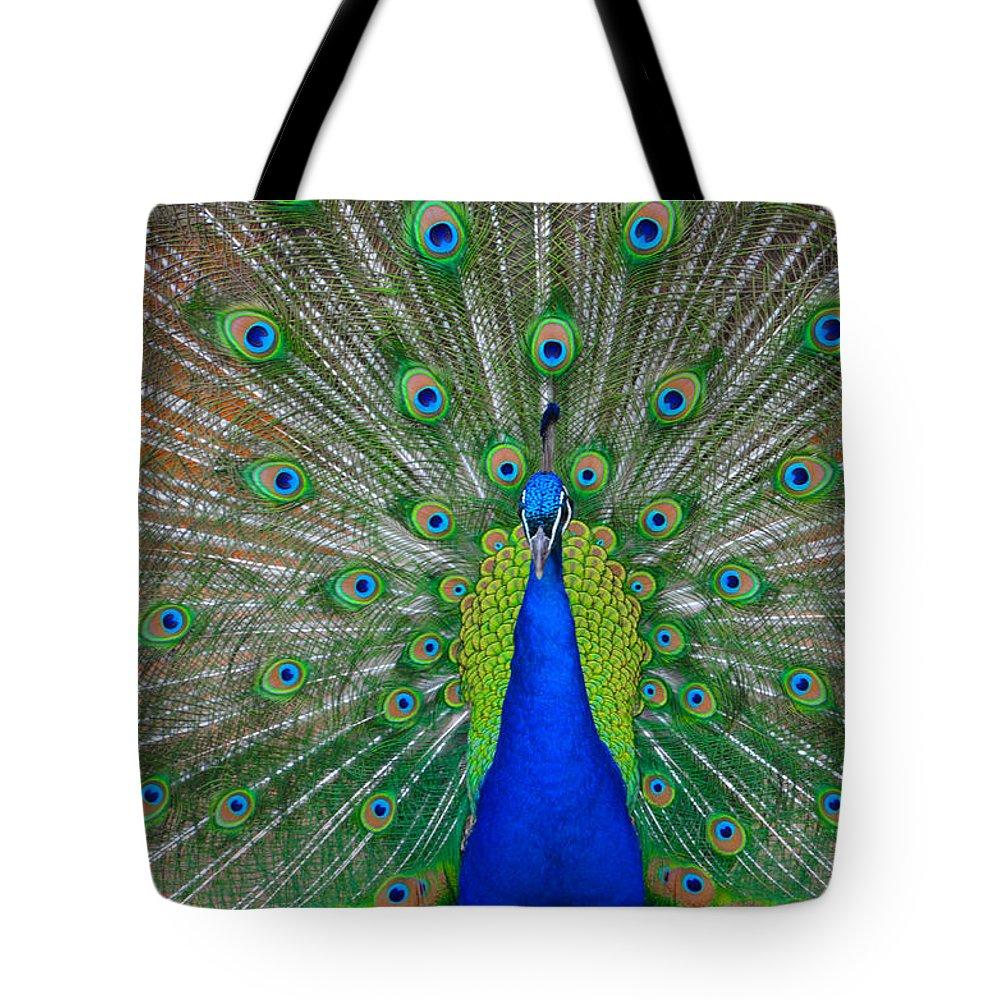 Pretty Tote Bag featuring the photograph Pretty Peacock by Bill Cannon