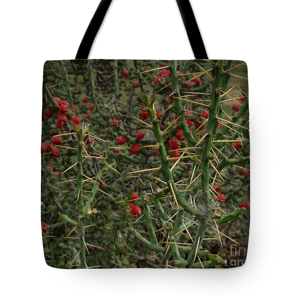 Cylindropuntia Leptocaulis Tote Bag featuring the photograph Prickly Pete Cactus by Peter Piatt