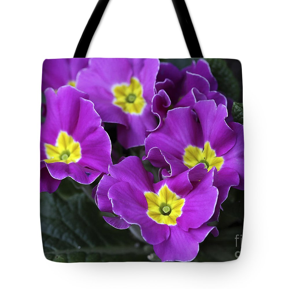 Flowers Tote Bag featuring the photograph Primrose Purple by Deborah Benoit