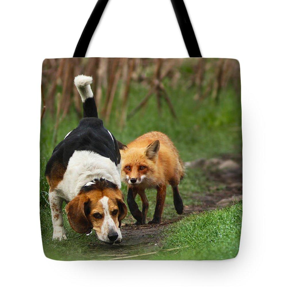 Rare Tote Bags
